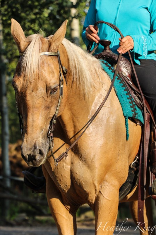 Quarter K Ranch Natural Horsemanship Horse Training Trail